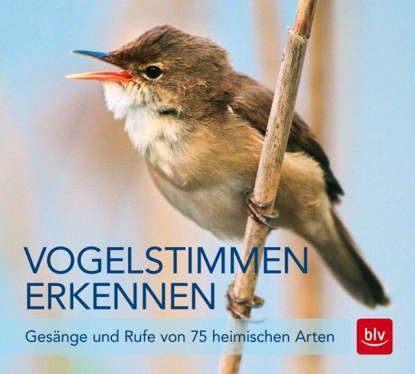Schulze, Vogelstimmen CD, Vogelstimmen erkennen