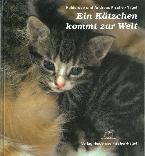 Katzen, Kätzchen, Kinderbücher, Kinder in der Natur