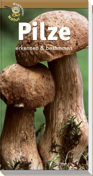 Pilze, Pilze bestimmen, Pilze erkennen, Pilzführer