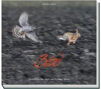 Beizjagd, Falknerei, Greifvögel
