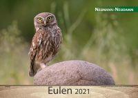 Kalender, Eulen, 2021