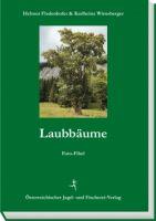 Laubbäume, Baumbestimmung, Wald