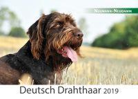 Kalender, Jagdkalender, Deutsch Drahthaar
