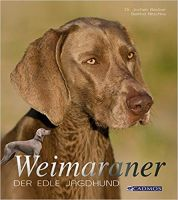 Weimaraner, Hunderasse