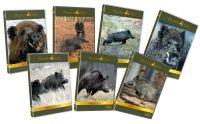 DVD-Paket: Schwarzwildfieber, Hunters Video, Schwarzwild