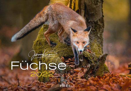 Kalender Füchse, Kalender 2022, Füchse