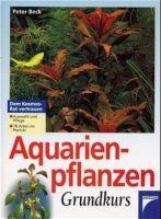 Aquarium, Aqaurien-Bepflanzung, Aquarium-Pflanzen
