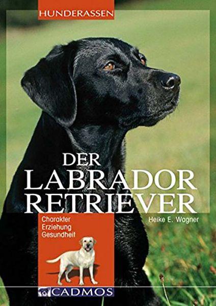 Jagdhunde, Labrador, Retriever, Labroadorretriever