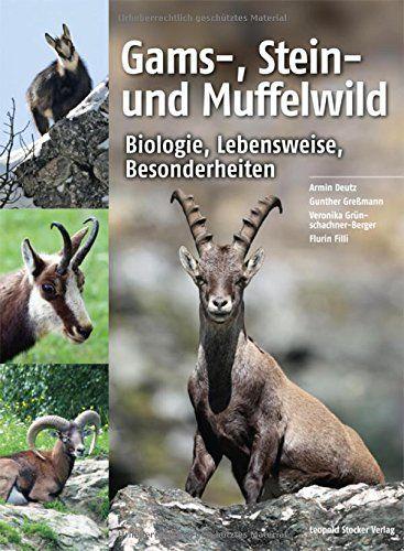 Gamswild, Steinwild, Muffelwild, Gemse, Steinbock, Muffel